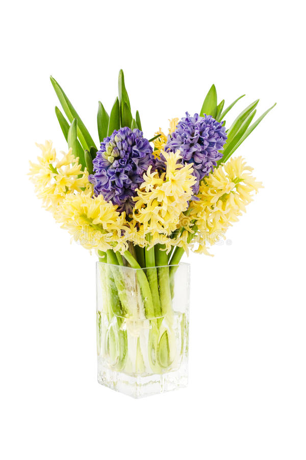 Bouquet of fresh yellow and purple hyacinth flowers in vase. Isolated over white stock photos