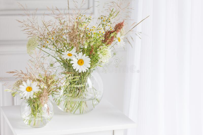 Bouquet of gentle camomile in white cup. Morning light in the room. Soft home decor,  vase with white flowers on  white wall stock photography
