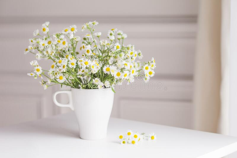 Bouquet of gentle camomile in white cup. Morning light in the room. Soft home decor,  vase with white flowers on  white wall royalty free stock photo
