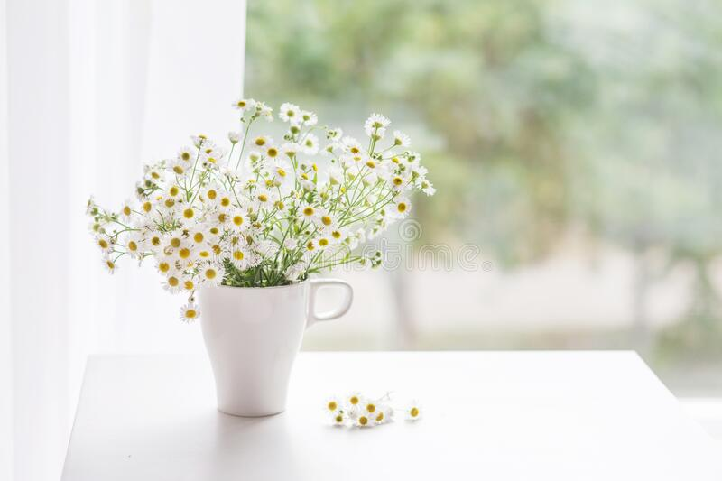 Bouquet of gentle camomile in white cup. Morning light in the room. Soft home decor,  vase with white flowers on  white wall royalty free stock photos