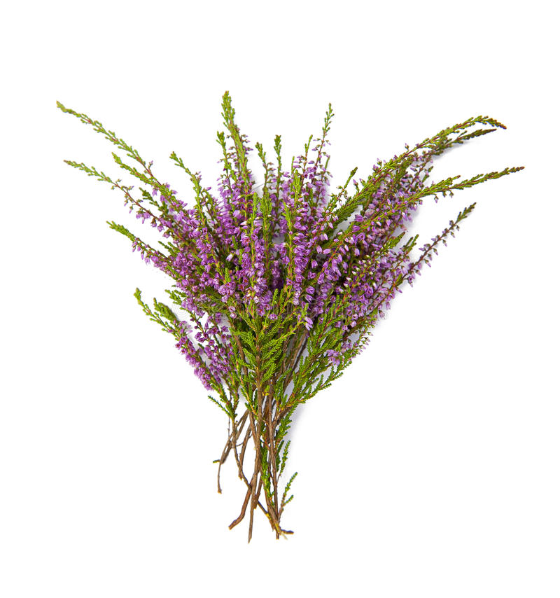 Bouquet of heather stock photo