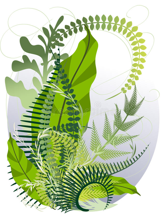 A bouquet of herbs and ferns stock illustration