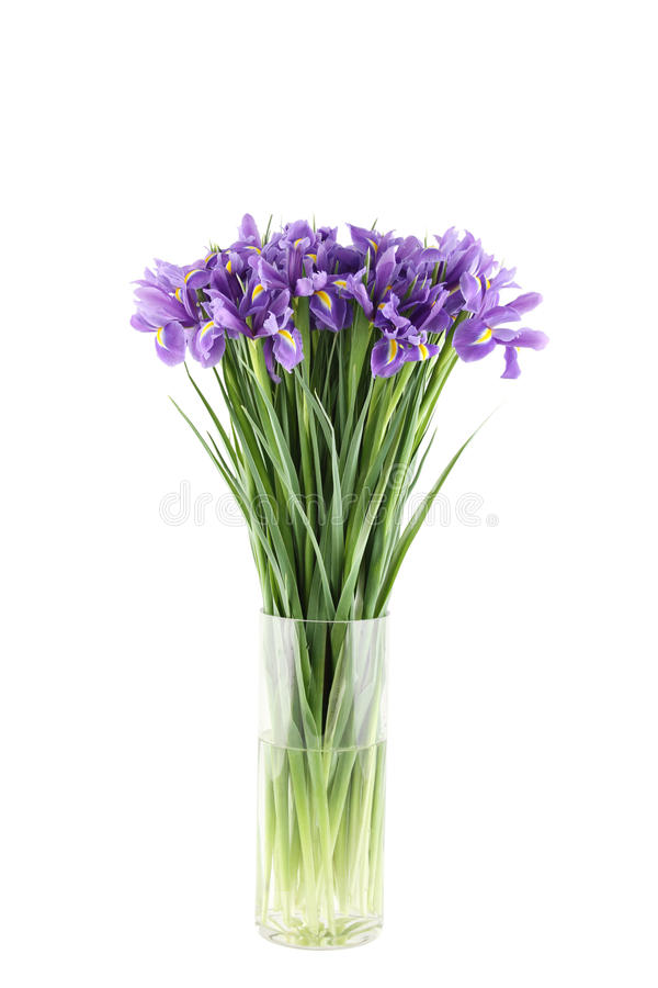 Bouquet of irises. Close-up of a beautiful bouquet of purple irises in a glass vase. Isolated on white background stock image