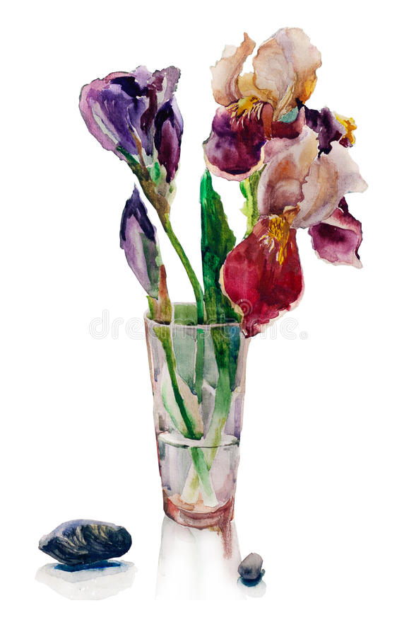 Bouquet of irises botany watercolor floral painting royalty free illustration