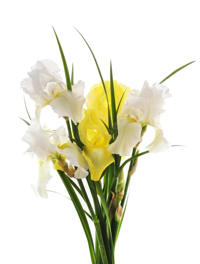 Bouquet of irises. Bouquet of colored irises on a white background royalty free stock image