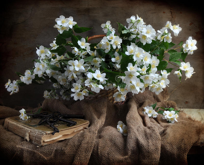 Bouquet of jasmin. A bouquet of jasmin is in a basket, alongside old book stock photos