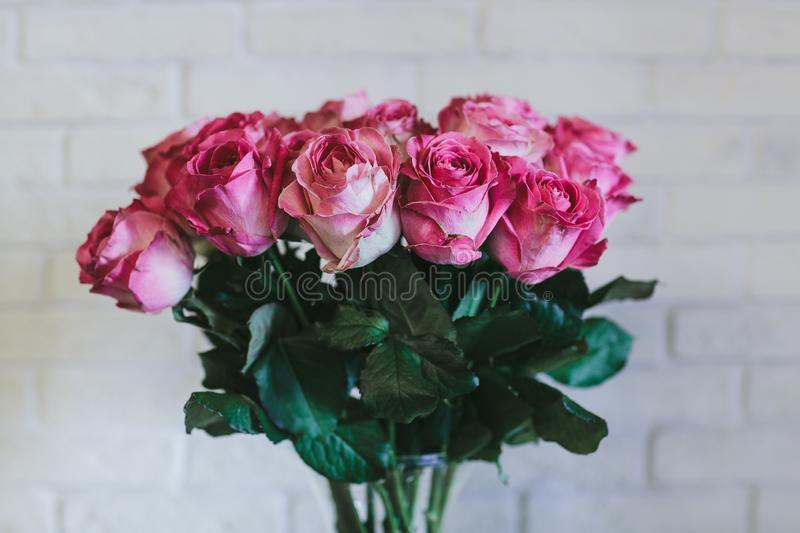 A bouquet of large pink roses close up stock photo
