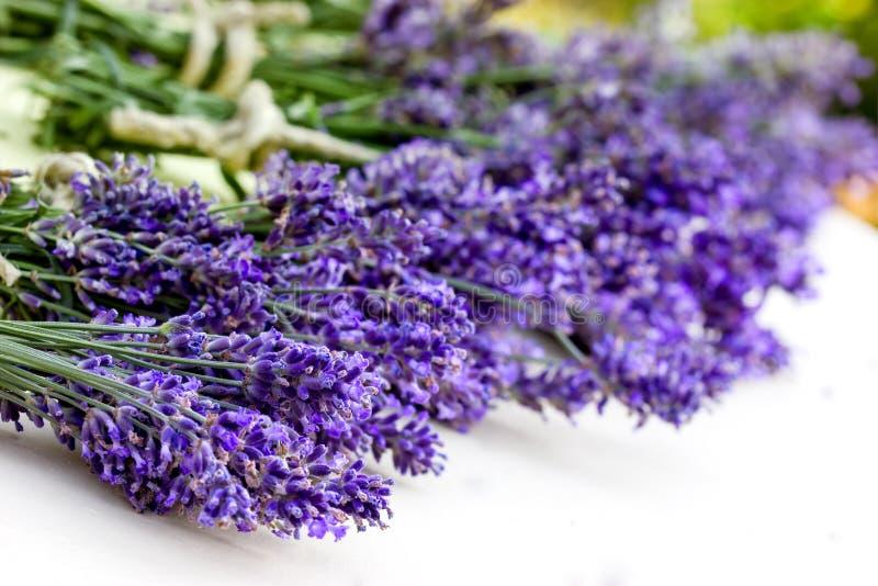 Bouquet of lavender stock photos