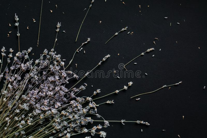 Bouquet of lavender on a black background stock photos