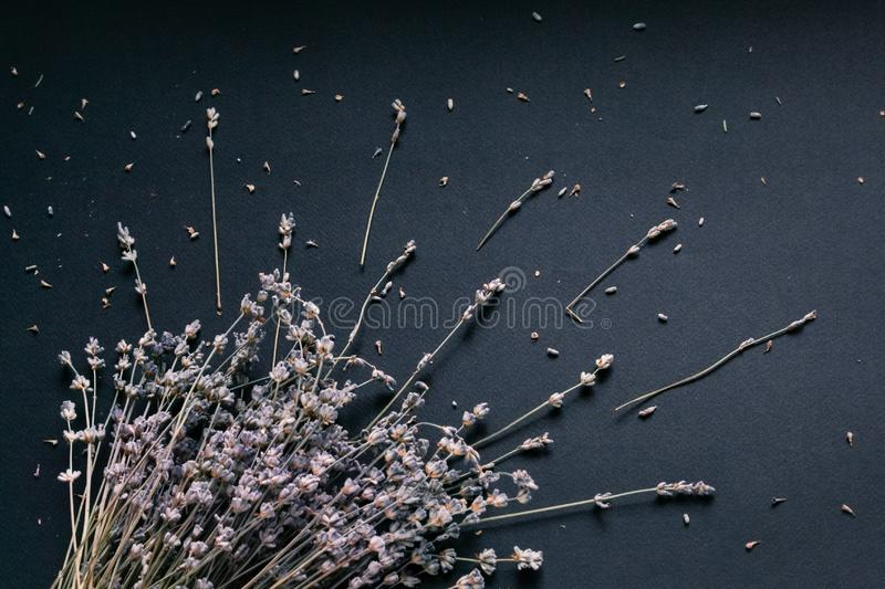 Bouquet of lavender on a black background stock photography