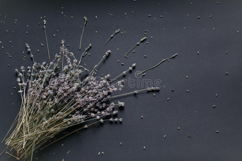 Bouquet of lavender on a black background stock photo