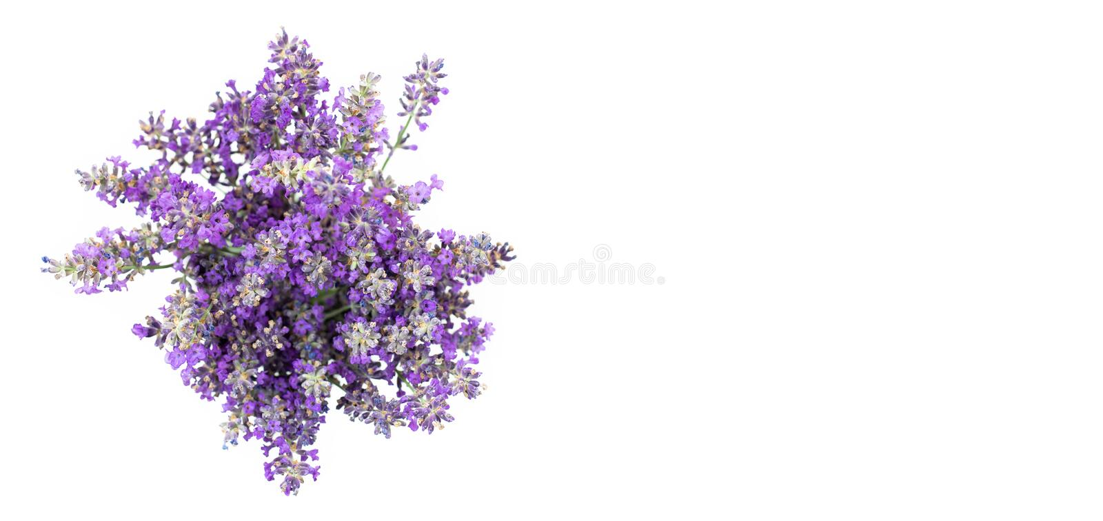 Bouquet of lavender on a white isolated background. Medicinal plants. View from above stock photo