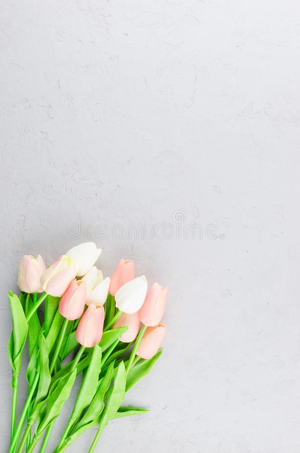 bouquet of light pink tulips on a gray concrete background royalty free stock photography