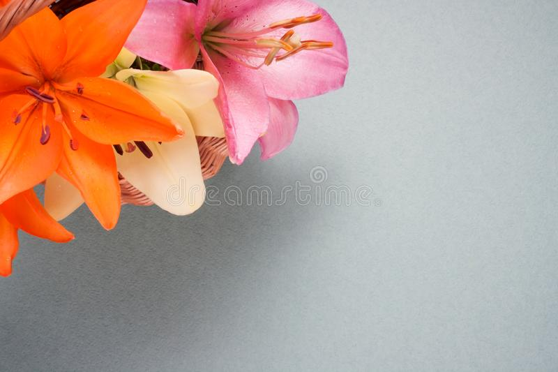 Bouquet of light yellow, orange and pink lily flowers in a basket on gray background. With copy space royalty free stock photo