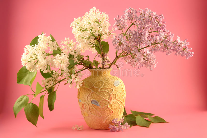 Bouquet of a lilac royalty free stock images