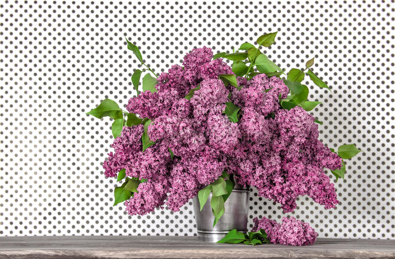 Bouquet of lilac blossoms on polka dot wallpaper background stock images