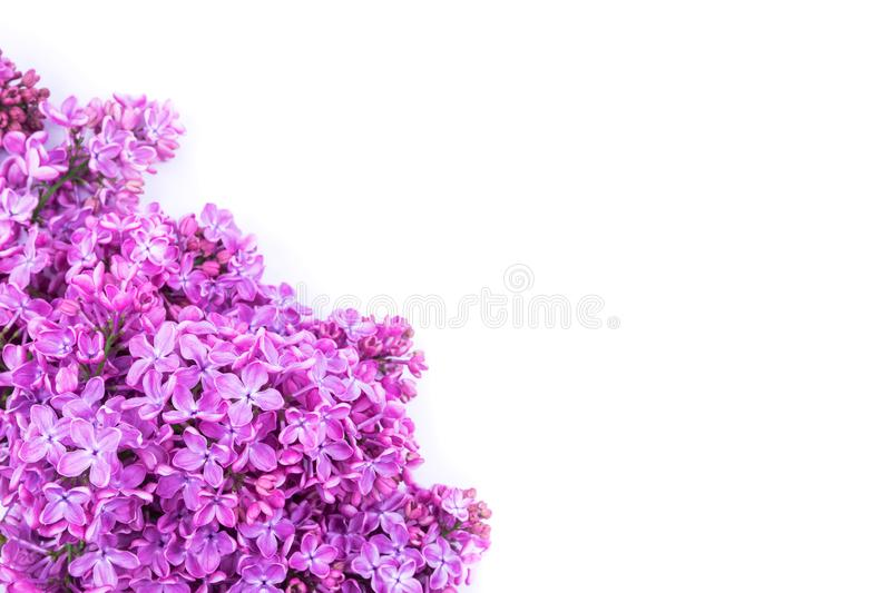 Bouquet of lilac flowers isolated on white background. Syringa vulgaris. Copy space. Greeting card. royalty free stock photos