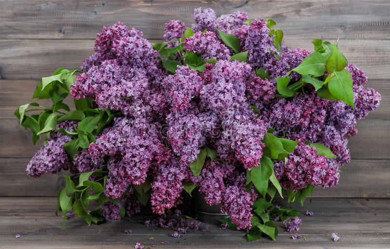 Bouquet lilac flowers wooden background royalty free stock photo