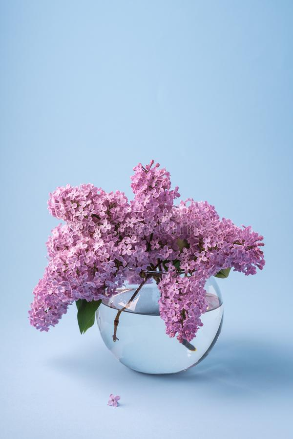 Bouquet lilas de floraison dans le vase transparent à sphère sur le fond bleu avec peu de fleur image stock