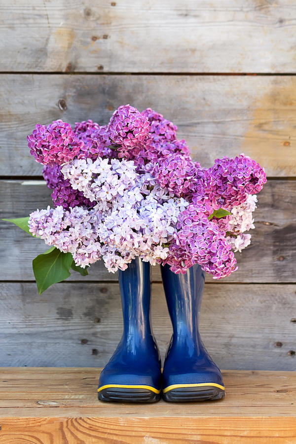Bouquet lilas et bottes en caoutchouc photos stock