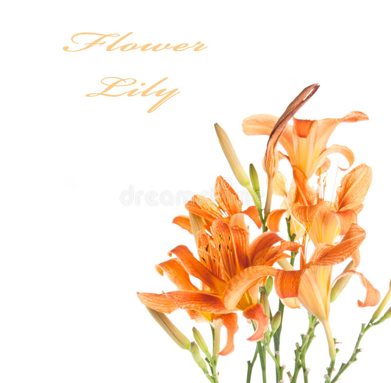 Download Bouquet of lilies stock photo. Image of botanical, yellow - 25565014