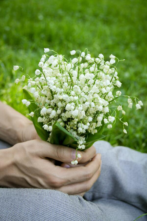 Bouquet of lilies of the valley in the hands of a man, royalty free stock photography