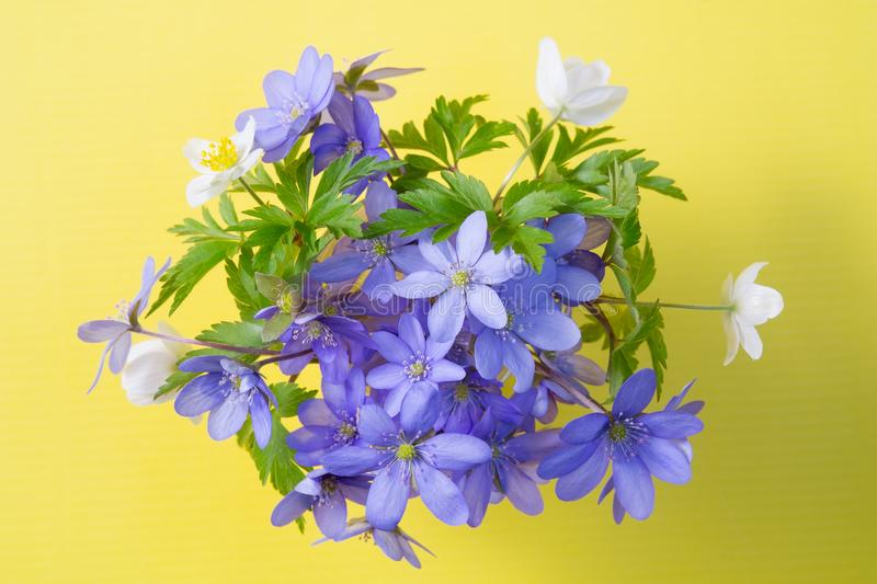 Liverleaf and Anemone on a yellow stock image