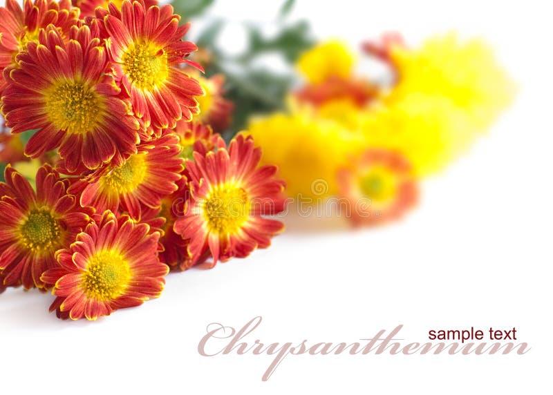 Bouquet lumineux des chrysanthemums photo stock