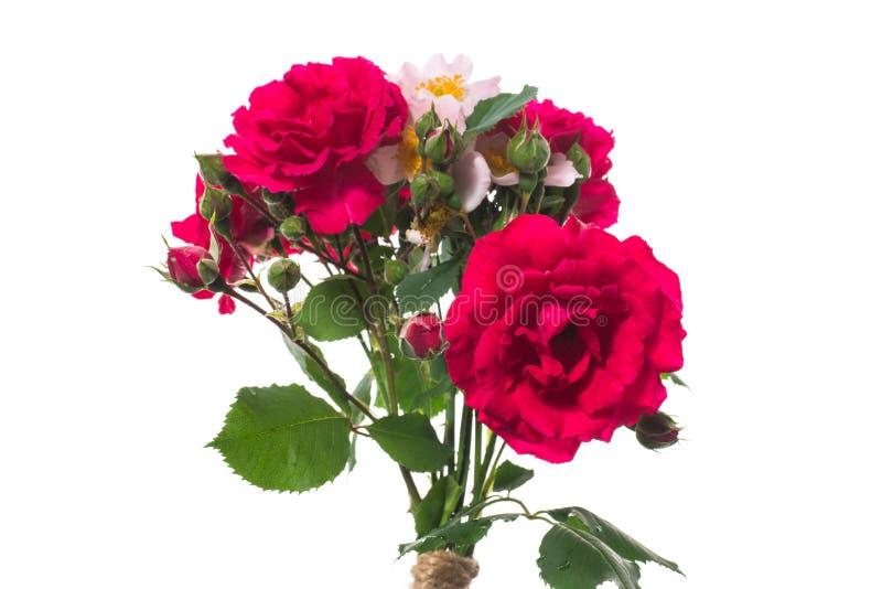 Bouquet med vackra röda rosor på en vit royaltyfri fotografi