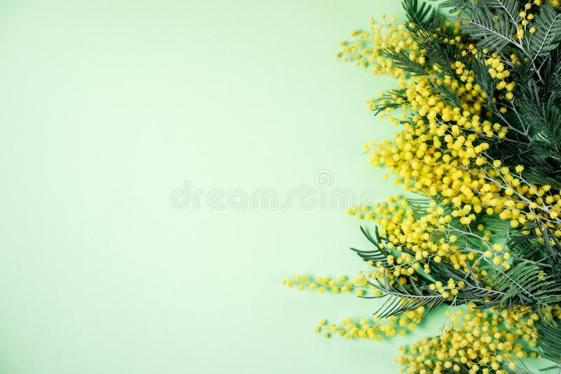 Bouquet of mimosa flowers on green background. International Women Day. Top view, flat lay stock image