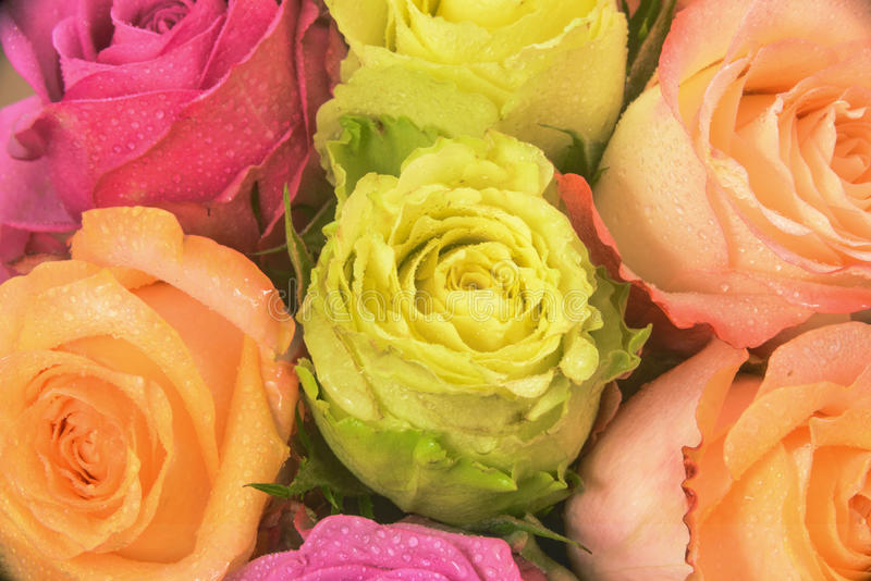 Bouquet multicolore de Rose images libres de droits