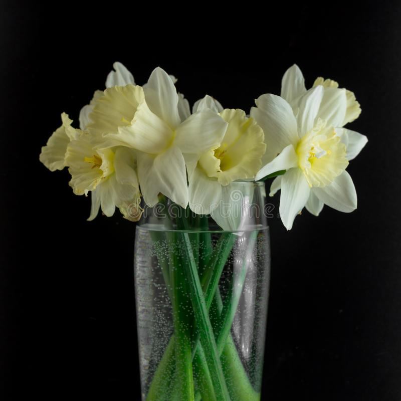 Bouquet of narcissus. Spring flowers. Black background royalty free stock photos