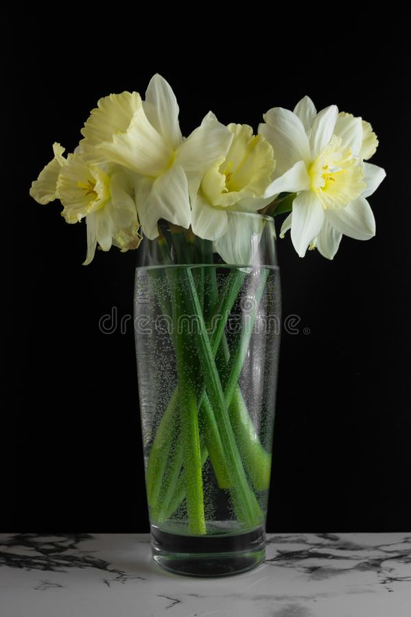 Bouquet of narcissus. Spring flowers. Black and marble background royalty free stock photo