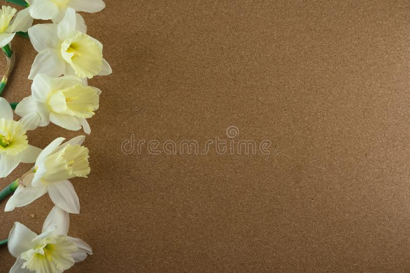 Bouquet of narcissus. Spring flowers. Cork background royalty free stock image