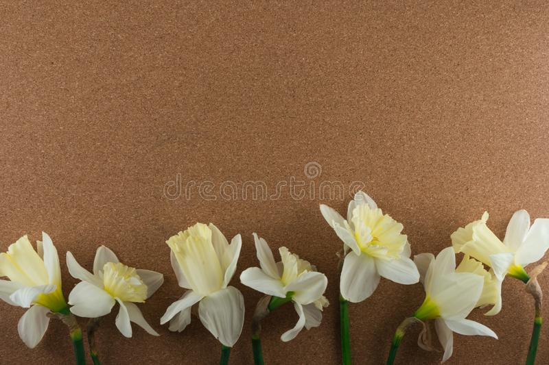 Bouquet of narcissus. Spring flowers. Cork background stock image