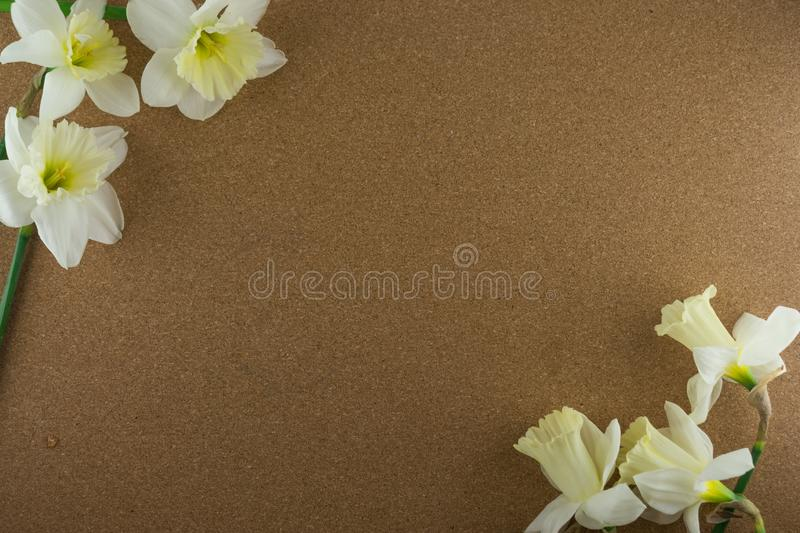 Bouquet of narcissus. Spring flowers. Cork background.  royalty free stock image