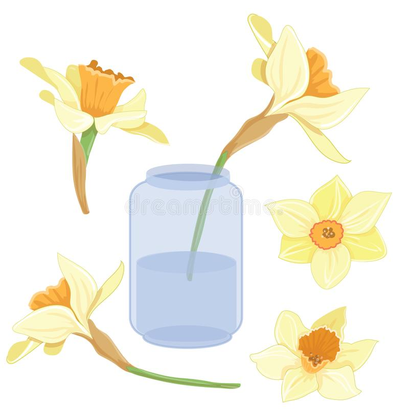bouquet narcissus in a vase isolated vector clipart set illustration rh dreamstime com spring vector vr spring vector images