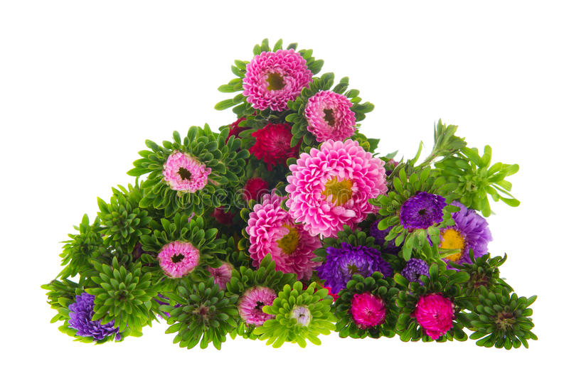 Bouquet New England Asters on white