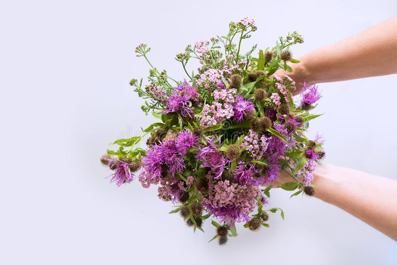 Bouquet od wild purple flowers in female hand on grey background royalty free stock images