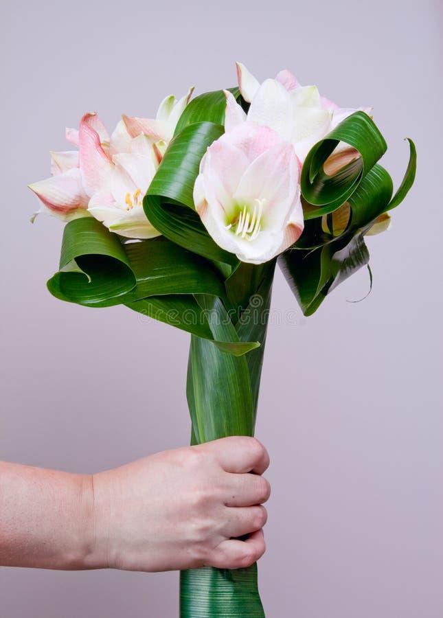 Free Bouquet Of Amaryllis Royalty Free Stock Photography - 20429987