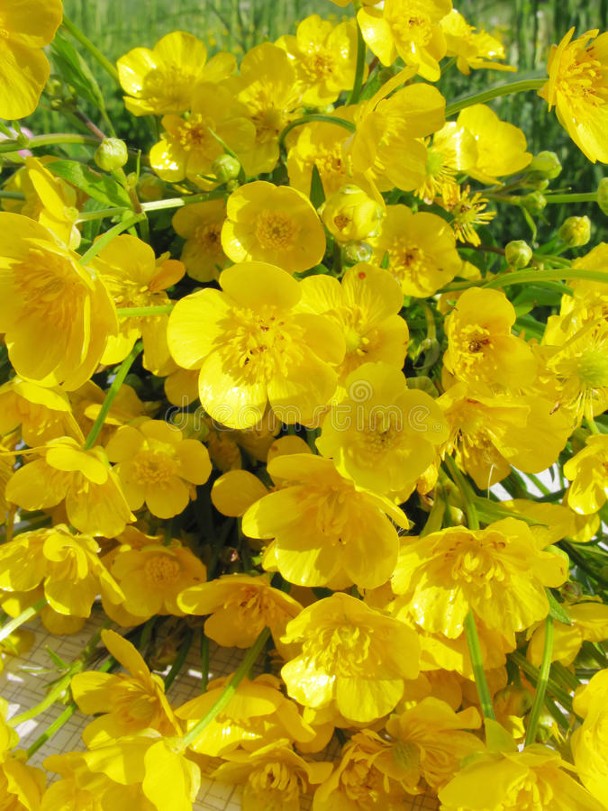 Free Bouquet Of Field Buttercups Flowers Stock Photography - 14493622