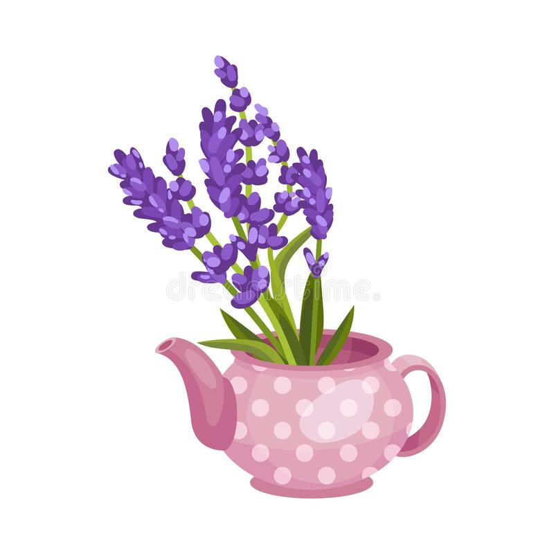 Free Bouquet Of Lavender In A Teapot. Vector Illustration On A White Background. Stock Image - 158372761