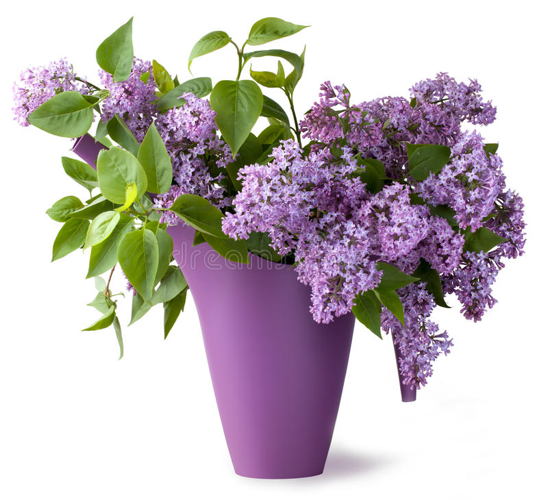 Free Bouquet Of Lilac Flower Royalty Free Stock Image - 25142656