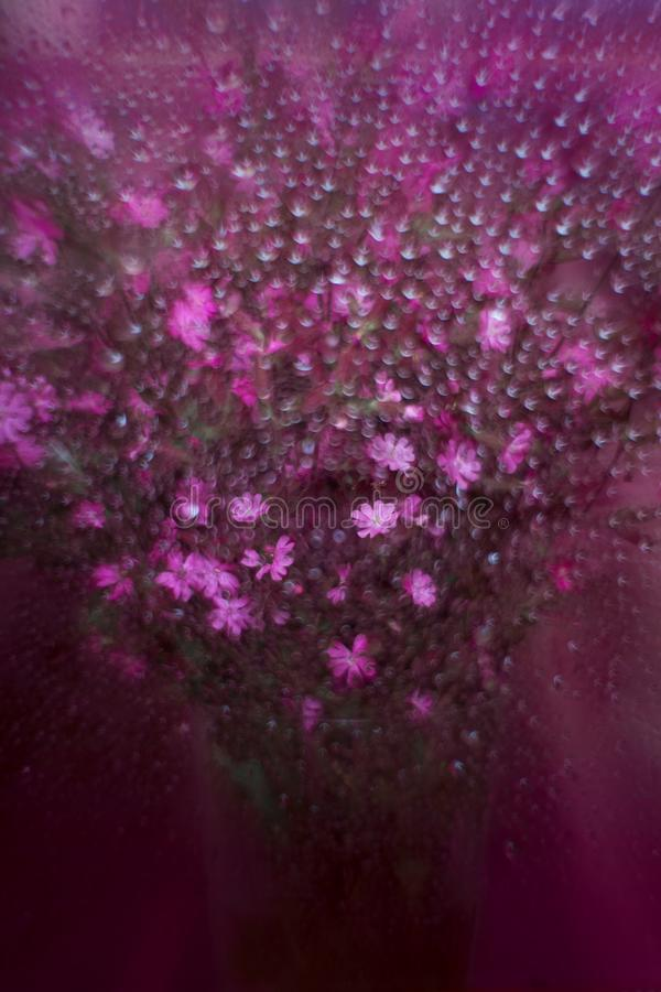 Free Bouquet Of Violet Flowers Royalty Free Stock Photo - 104802105