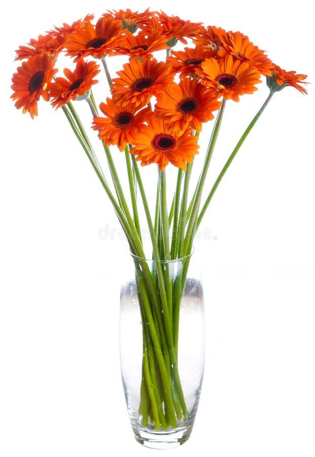 Bouquet of orange Gerbera flowers royalty free stock photo