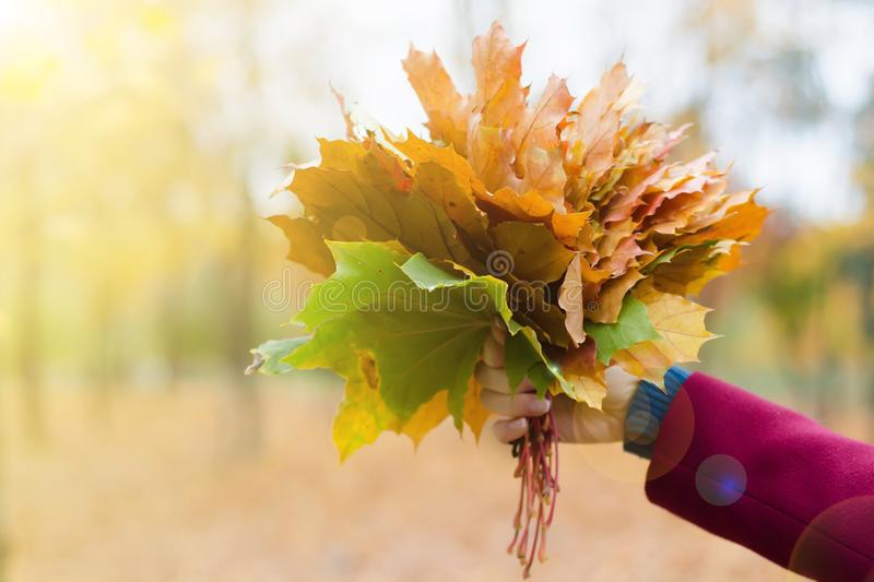 Bouquet of orange leaves in hand royalty free stock photography