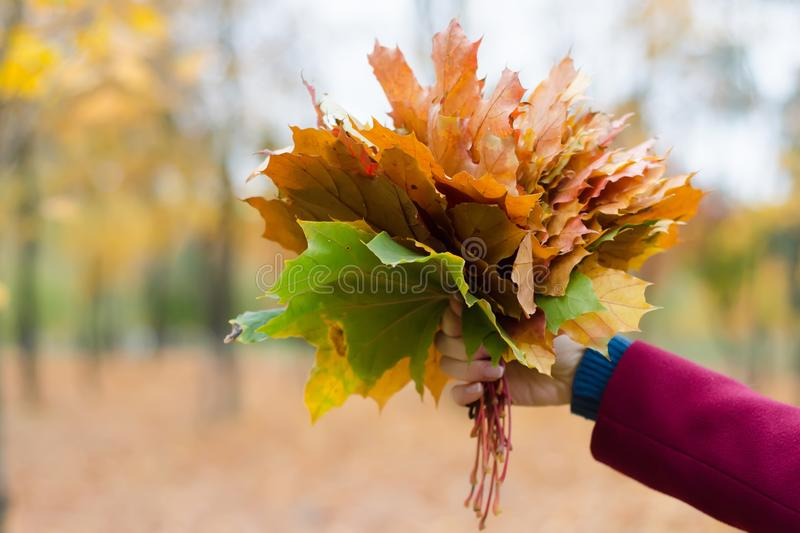Bouquet of orange leaves in hand stock image
