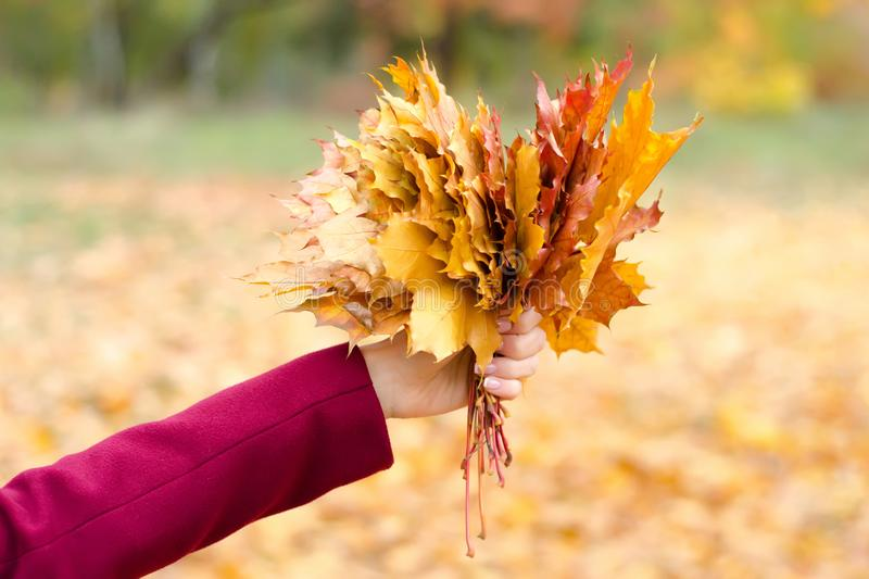 Bouquet of orange leaves in hand royalty free stock images