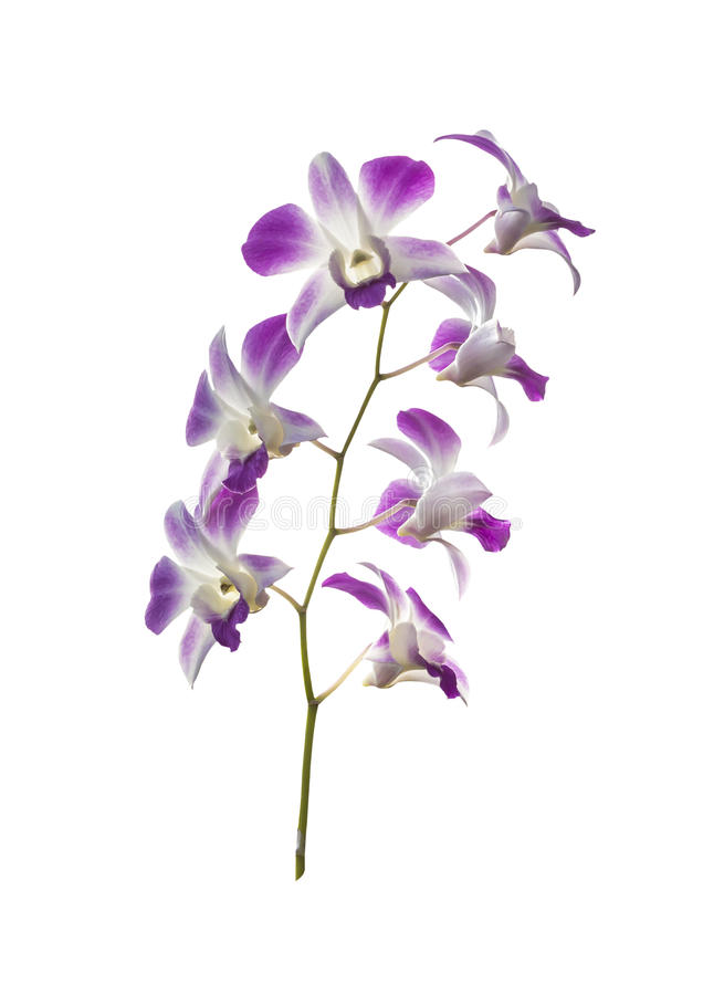 Download Bouquet orchid flowers stock photo. Image of flowers - 39508018