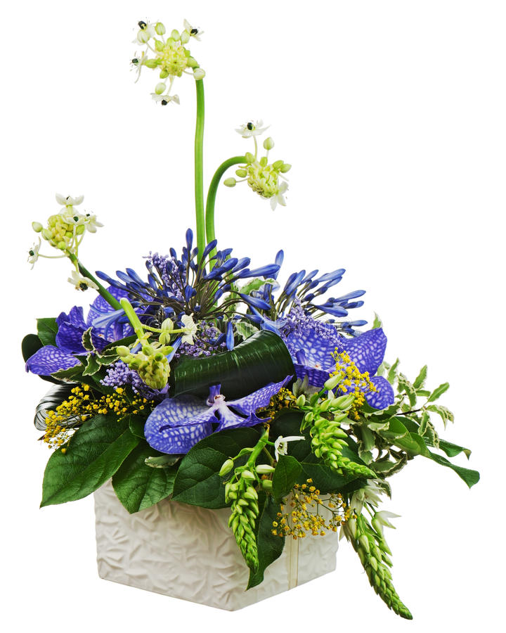 Bouquet from orchids and Arabian Star flower (Ornithogalum arabicum) in vase isolated on white background. royalty free stock photography